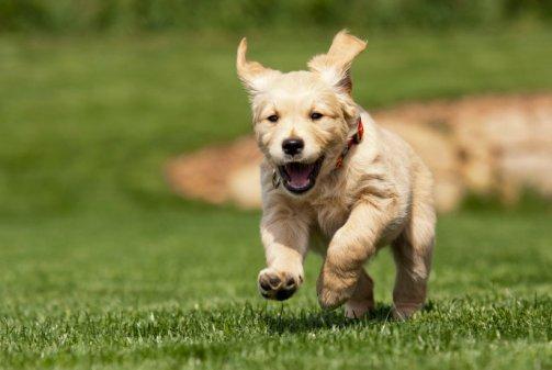 puppy-running.jpg